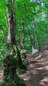 Der Kreuzweg von Mariawald