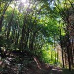 4 Wochen nach der Flut im Schleidener Tal